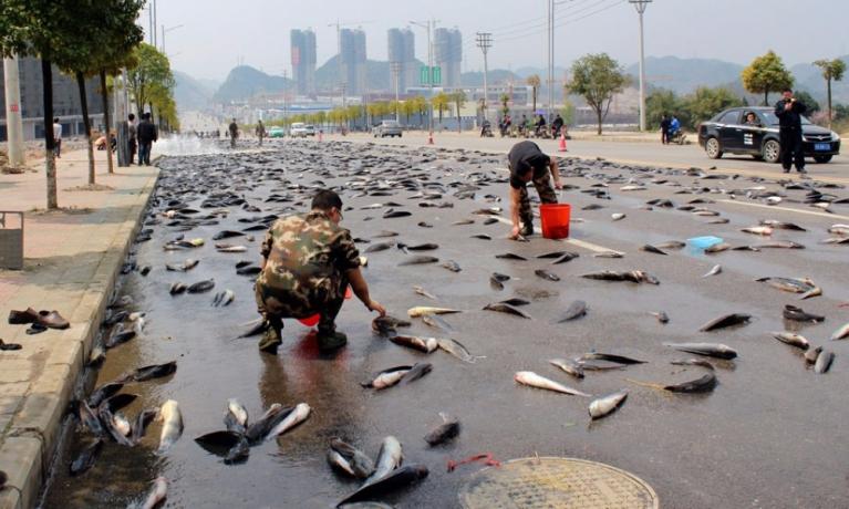Balık Yağmuru Nedir? Balık Yağmuru Nasıl Oluşur?