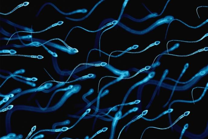 Spermler hakkında bilmeniz gereken 10 gerçek
